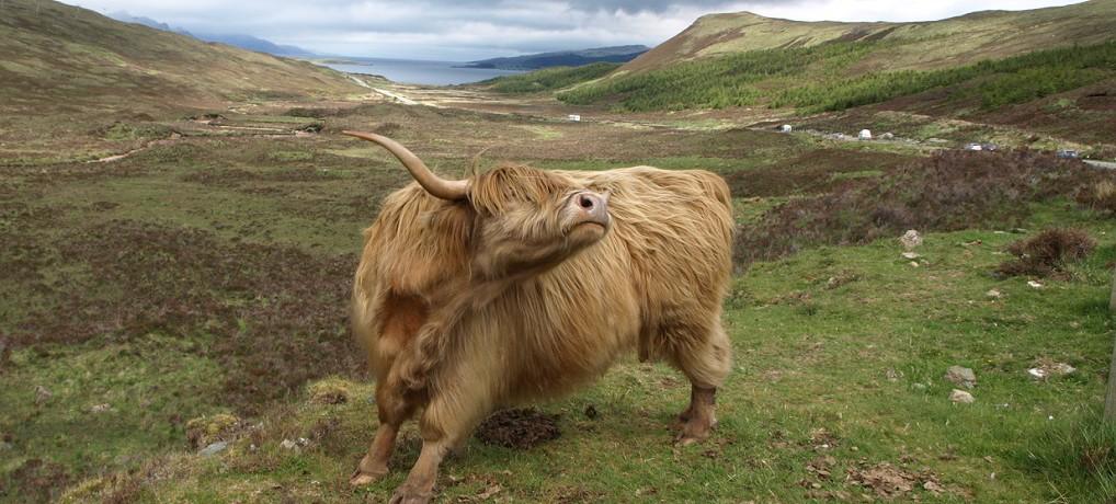 5 miejsc w Szkocji, które polecam.